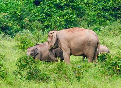Wildlife in Muthanga and Tholpetty wildlife sanctuary