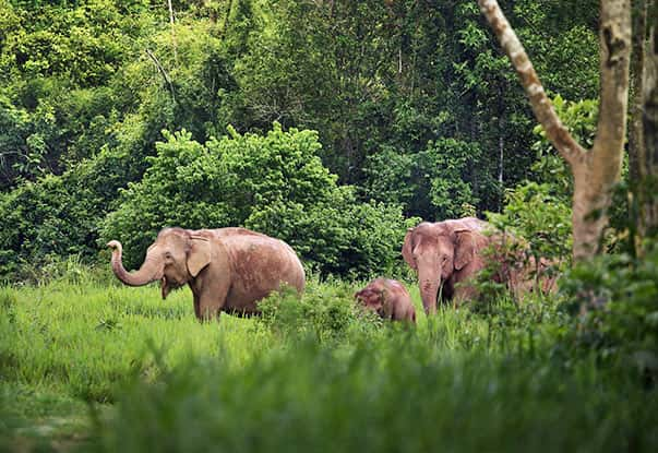 Wildlife in Wayanad where you can spot elephants roaming around