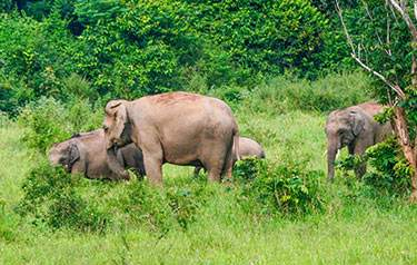 Wildlife in Wayanad Kerala