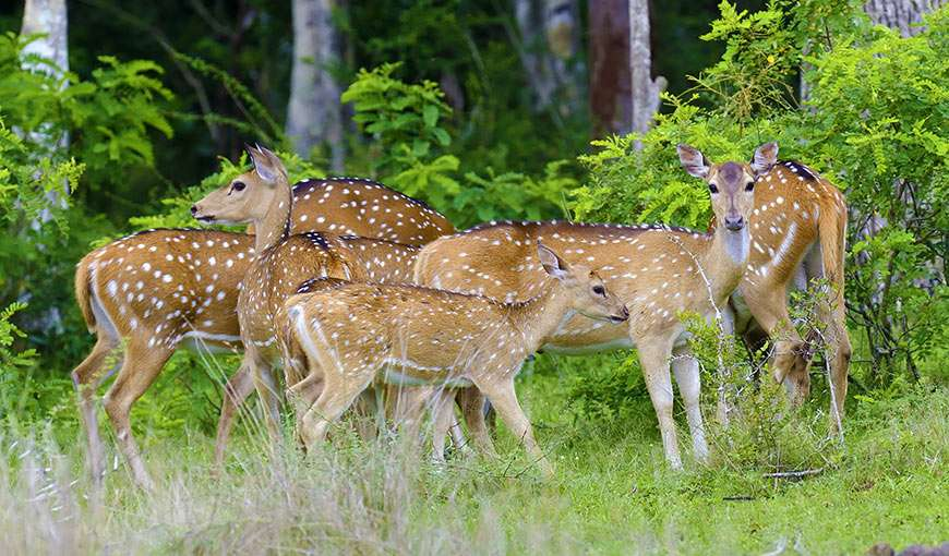 Muthanga Wildlife Sanctuary a nearby place to visit to our hotel in Wayanad