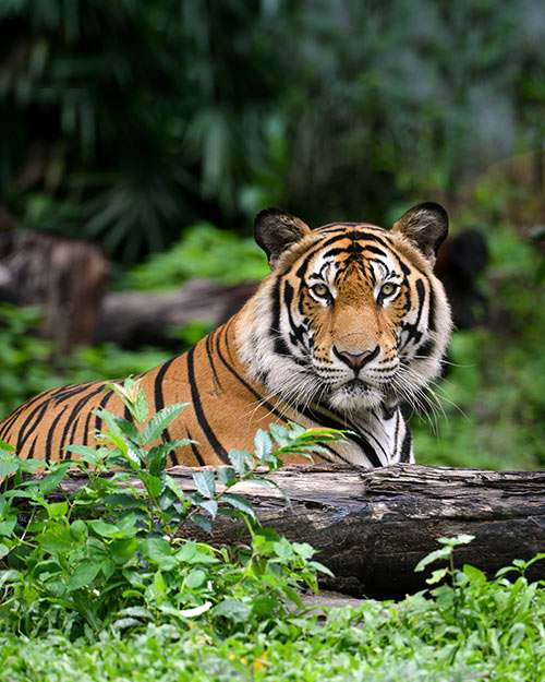 Wayanad Wildlife Sanctuary Kerala Muthanga Wildlife sanctuary