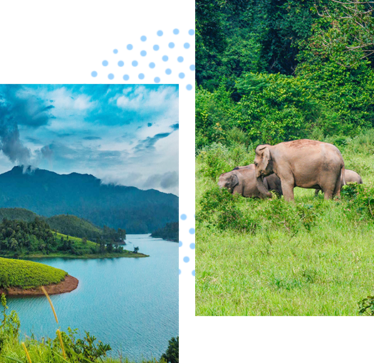 wayanad-package